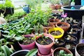 Various Organic Vegetables garden in house area Royalty Free Stock Photo
