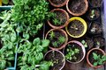 Various Organic Vegetables garden. Royalty Free Stock Photo