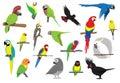 Různý papoušci návrh malby vektor ilustrace