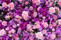 Various pink and purple flower background, top view Royalty Free Stock Photo