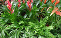Various plant detail high angle view of plants and flowers Royalty Free Stock Photography