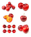 Various plum groups Royalty Free Stock Image