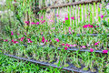 Various set of orchids in nursery of garden Royalty Free Stock Photo