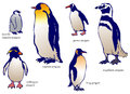 Various species of penguin with name vector create by Royalty Free Stock Images