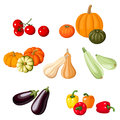Various vegetables illustration of pumpkins tomatoes peppers marrows and eggplants isolated on a white background Stock Photos