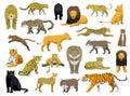 Various Wild Cat Panthera Vector Illustration
