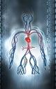 Vascular system digital illustration of in colour background Stock Image