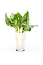 Vase With Chard Leaves Stock Photos