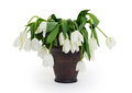 Vase full of droopy and dead flowers white tulips Stock Photography