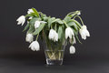 Vase full of droopy and dead flowers white tulips Royalty Free Stock Photography