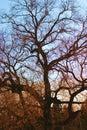 vecchia tonalità dell'albero Fotografie Stock Libere da Diritti