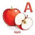 Vector alphabet letter A. Apple Royalty Free Stock Photo