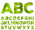 Vector alphabet letters made from green leaves on white Stock Image