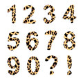 Vector alphabet numbers trendy leopard pattern exclamation and question mark isolated elements Stock Images