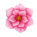 Vector anemone pink flower decorative illustration isolated on white Royalty Free Stock Photo