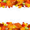 Vector autumn background with fall leaf Stock Photography