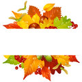 Vector autumn frame with fall leaf 2 Royalty Free Stock Photo