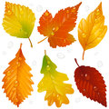 Vector autumn leaf set isolated on white background Royalty Free Stock Photos