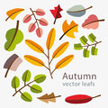 Vector autumn template. Modern stylized colorful leafs. Royalty Free Stock Photo