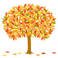 Vector autumnal tree. Royalty Free Stock Photos