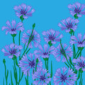 Vector background blue cornflowers Stock Image