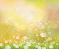 Vector   background with  dandelions. Royalty Free Stock Photo