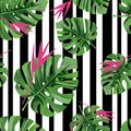 Exotic jungle plant tropical palm leaves with pink flowers and black stripes. Vector background.
