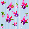 Vector Background with flower fuchsia Stock Image