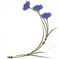 Vector background flowers cornflowers Stock Images