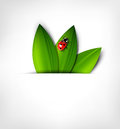 Vector  background with leafs and ladybird Stock Photos