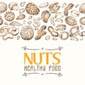 Vector background with nuts arranged horizontally Royalty Free Stock Photo