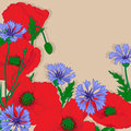 Vector background poppies bluebottle flowers Royalty Free Stock Photo