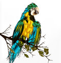 Vector background realistic parrot ara bird sit branch Stock Photos