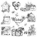 Vector background wallpaper sketch style honey, beekeeping. Color hand drawn set. Template with bee, hive, jar, barrel