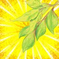 Vector backgroundl with sunrays and leaves eps Royalty Free Stock Photo