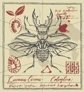 Retro banner with drawing of a stag-beetle