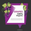 Vector Banner Grapes Organic.