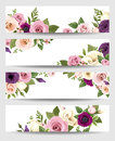 Vector banners with colorful roses, lisianthus and anemone flowers. Royalty Free Stock Photo