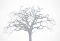 Vector bare old dry dead tree silhouette without l