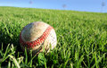 Vector Baseball On Grass Royalty Free Stock Image