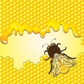 Vector bee and honeycombs Stock Photos