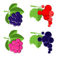 Vector berries Royalty Free Stock Image