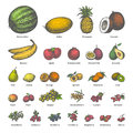 Vector big set different colored juicy ripe fruit
