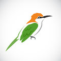 Vector of bird on white background.