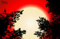 Vector black contour of tree leaves on red sunset background
