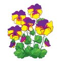 Vector bouquet with outline yellow and purple Pansy or Heartsease or Viola tricolor flower and green leaf isolated on white.