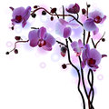 Vector branch of violet orchids Stock Photos