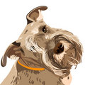 Vector Breed Miniature Schnauzer dog closeup Stock Photo