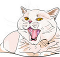 Vector British shorthair lilac cat screaming MEOW Royalty Free Stock Image