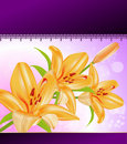 Vector card: orange lilies Royalty Free Stock Image